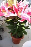 """3种花,是疾病的""""帮凶"""",别养在室内,毕竟每盆都带毒性"""